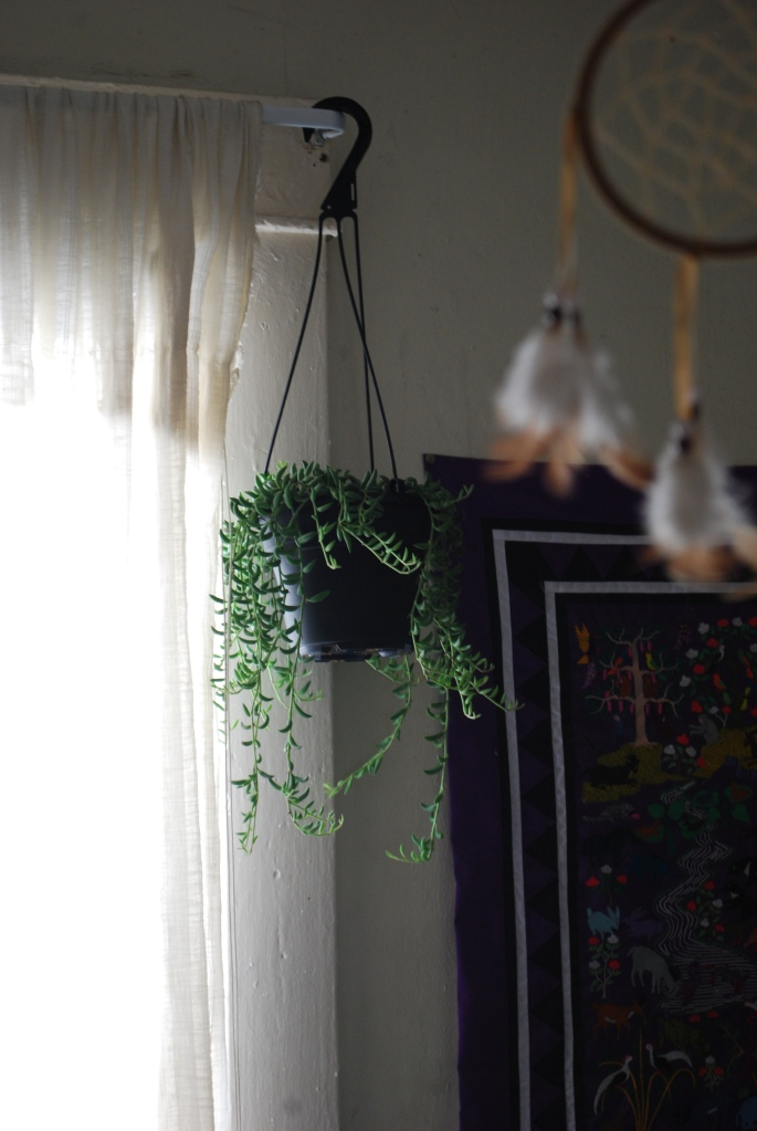 plant and light